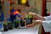 Neue Studie der Uni Halle: Wie der Klimawandel das Pflanzenwachstum verändert